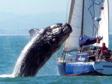 Una ballena salta sobre un yate
