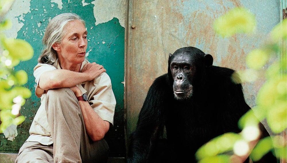 Jane y los gorilas