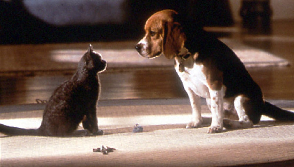El período de tregua está a punto de finalizar entre los perros y los gatos