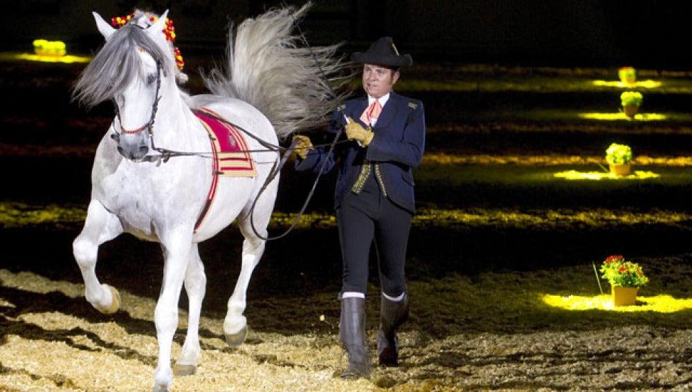 Exhibición de caballos