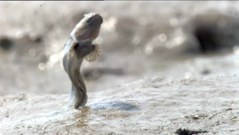 Realizadores gallegos consiguen imágenes nunca vistas de la vida en el fondo del mar