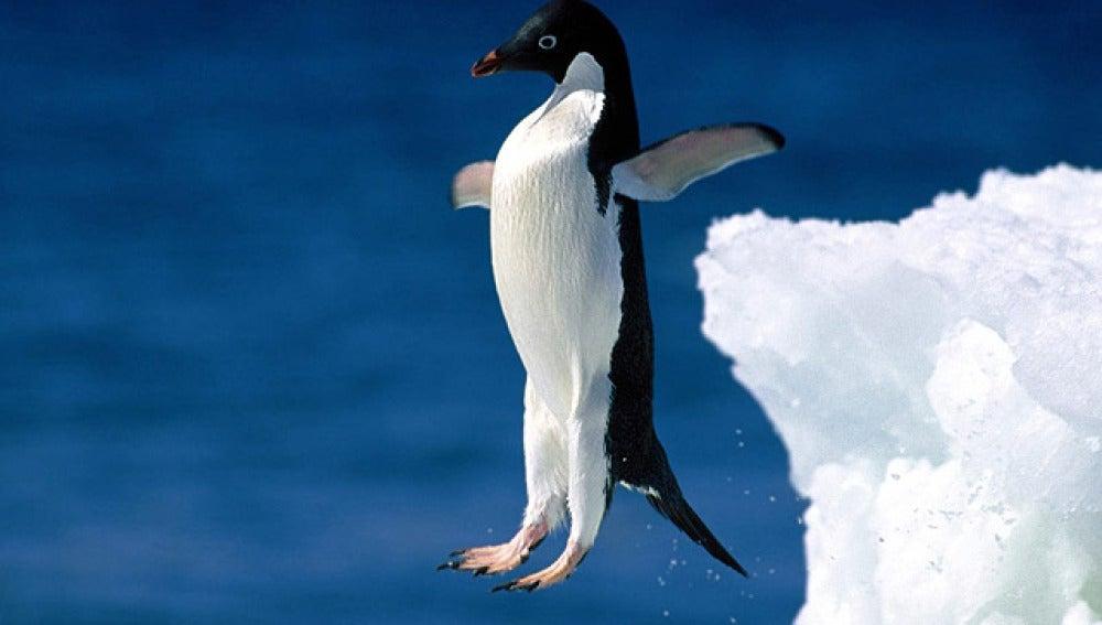 ¿Pingüinos voladores? Real o inocentada