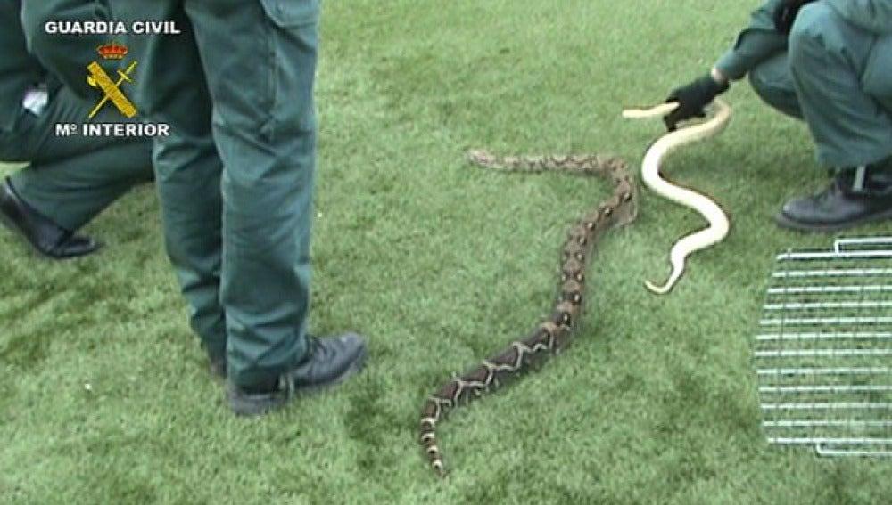 Serpientes incautadas
