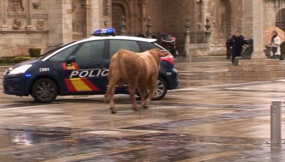 El toro fugado en León