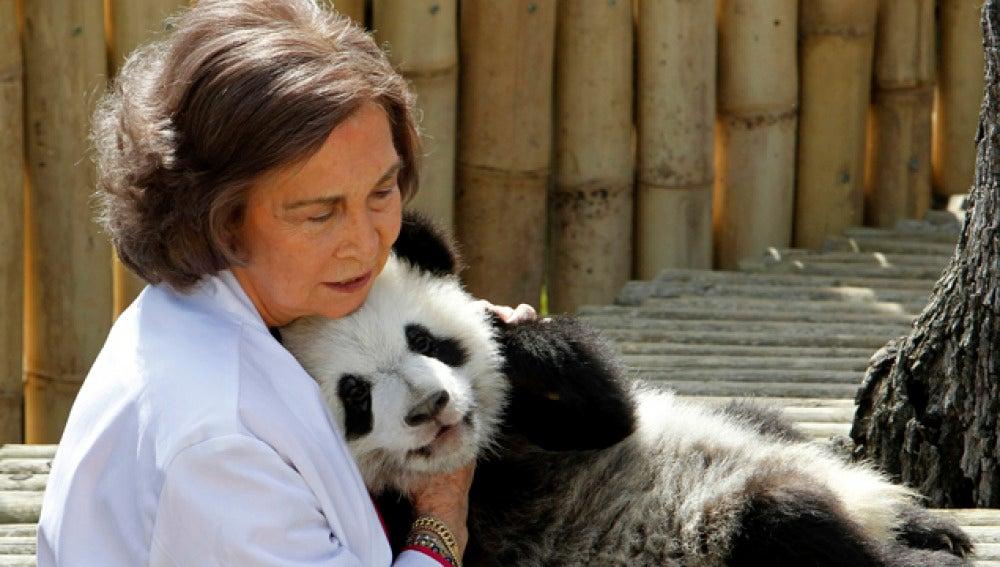 La Reina visitó a los pandas del zoo de Madrid