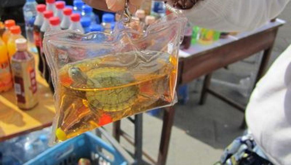 Una tortuga encapsulada en un llavero
