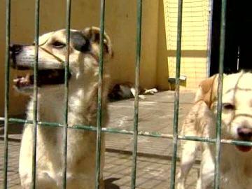 Dos perros en una perrera
