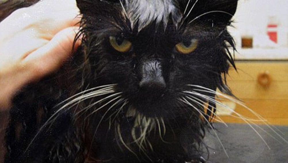 Un gato sobrevive después de que su dueño intentase cocinarlo