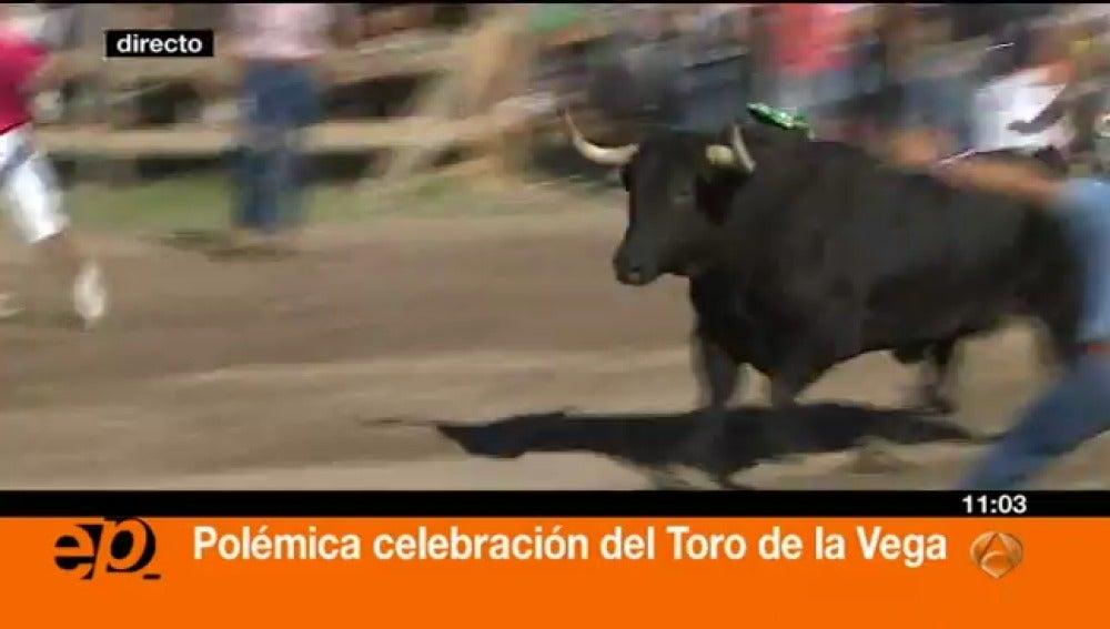 Toro de la Vega