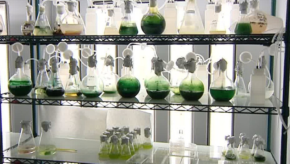 Primer banco de algas en España