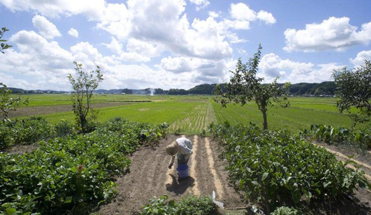 Plantación de arroz en Isumi City, en la prefectura de Chiba, Japón.