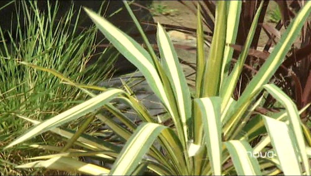 Plantas agresivas pero también con encanto