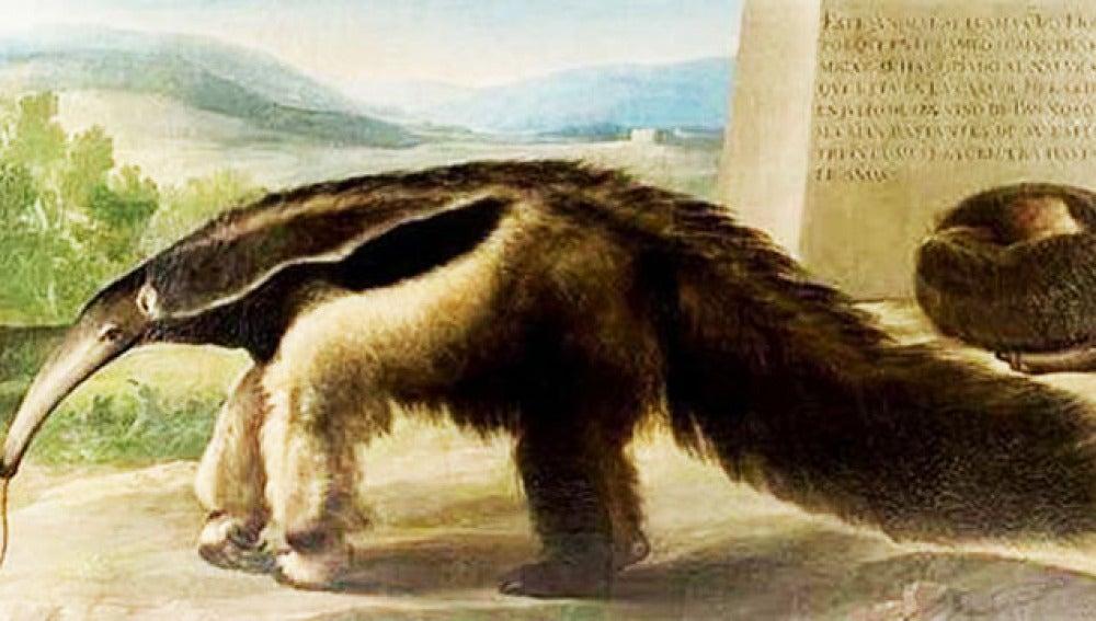 Lienzo sobre un oso hormiguero que se atribuye a Francisco de Goya.