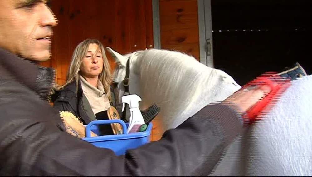 Los cuidados de un caballo