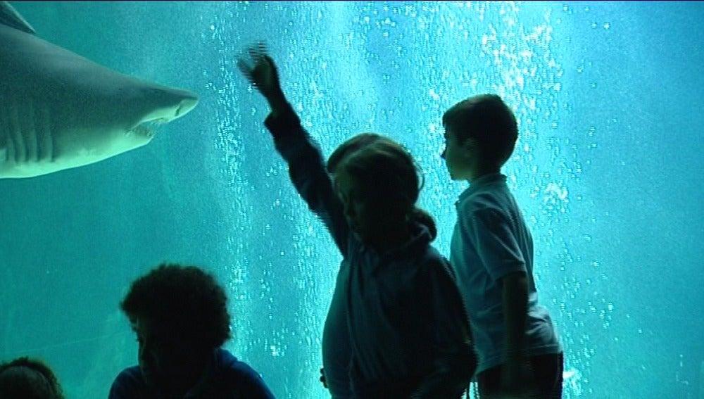 Niños entre tiburones (29-10-11)