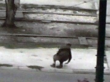 El terrorista es abatido por un francotirador
