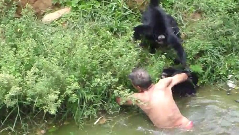 Ataque de los monos al mecánico borracho