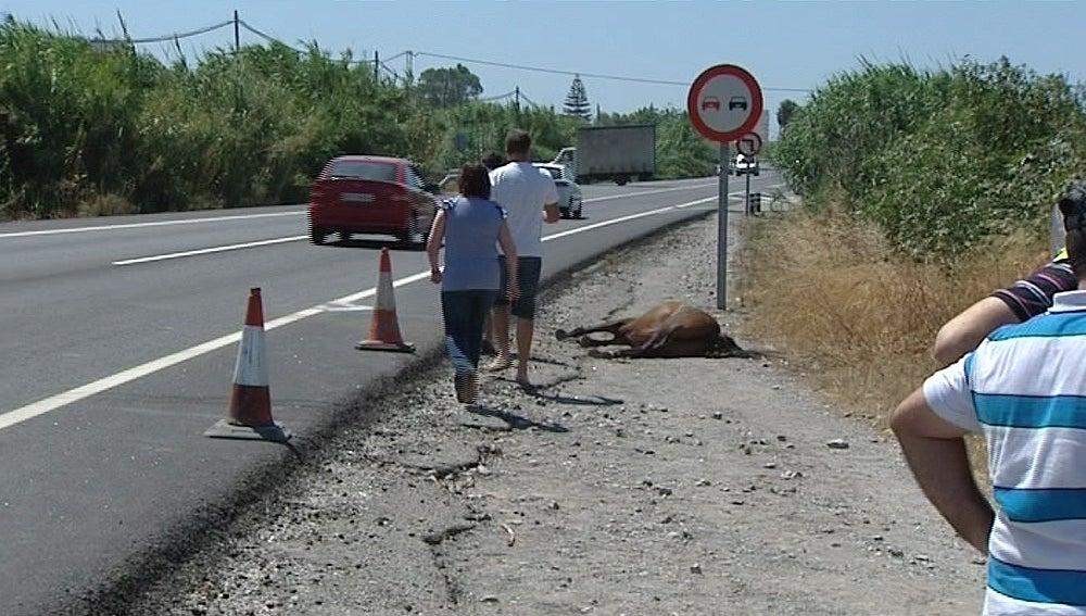 Accidentes de tráfico causados por animales