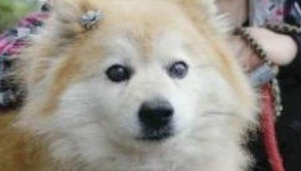 Pusuke, el perro más viejo del mundo