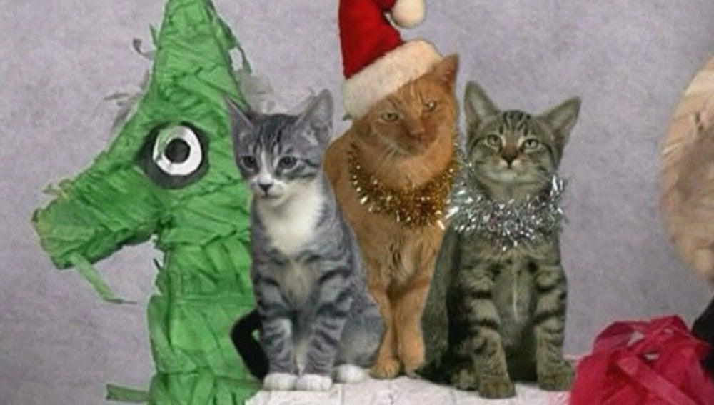 No hay Navidad sin gatitos