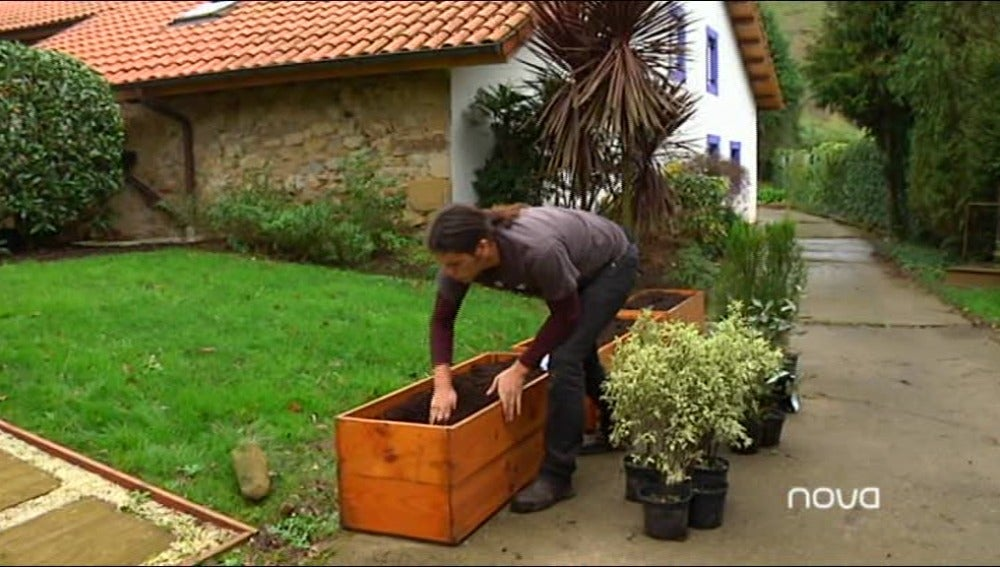 Decora y separa el jardín con setos