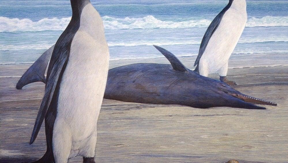 Reconstruyen el fósil de un pingüino prehistórico gigante