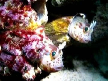 Encuentran tres nuevas especies de estrellas de mar