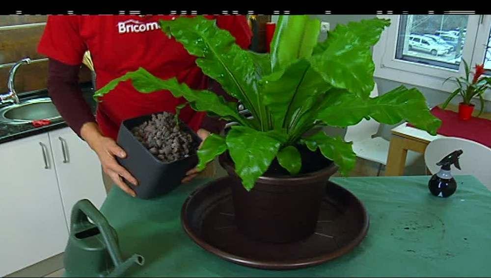 Por tus plantas de interior a punto