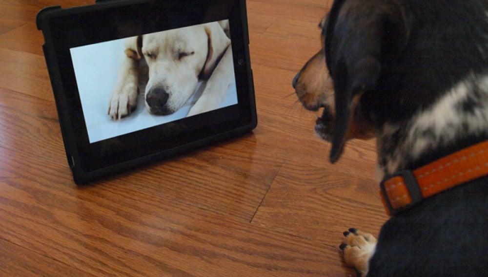 Dog TV, primer canal para perros