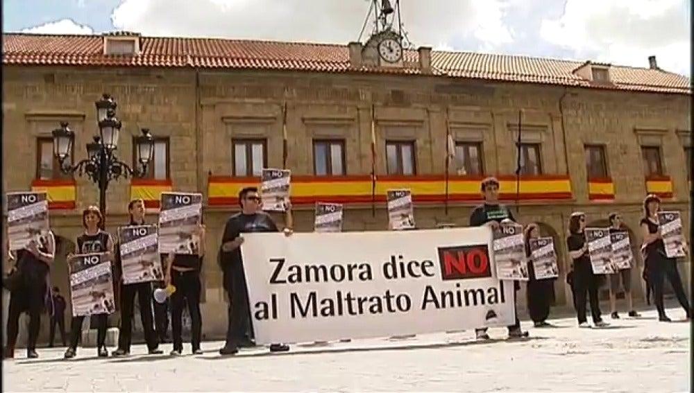 La organización 'Defensa animal' ha pedido en Benavente el indulto al toro enmaromado de este año