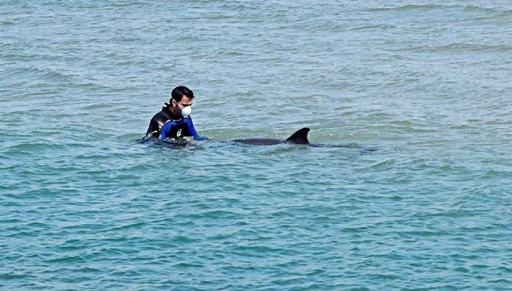 Delfín en la playa.