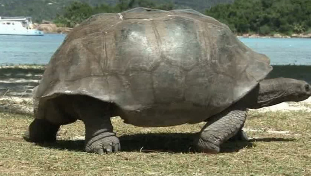 Las islas Seychelles es uno de los paraísos de las tortugas