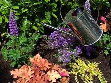 plantas vivaces brcomana i jardinera - Bricomania Jardineria