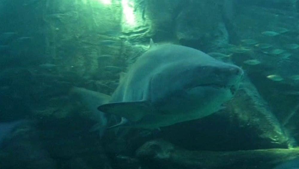 Alarmante aumento del número de tiburones