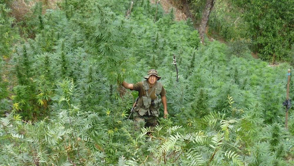 53 toneladas de marihuana (04-08-2012)