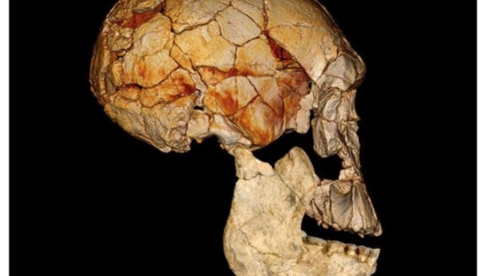 Cráneo hallado en Kenia en 1972