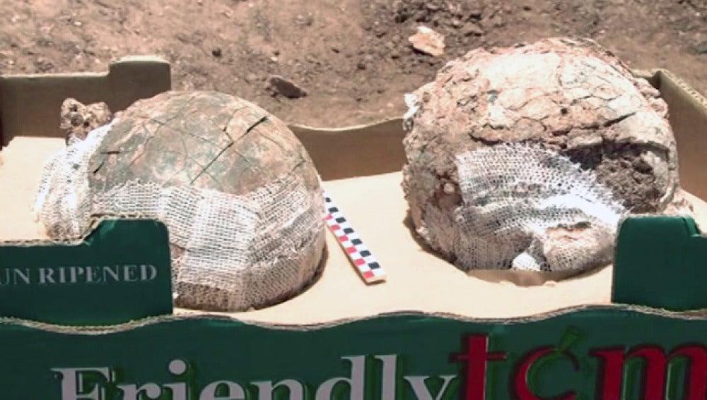 Posibles huevos fosilizados de avestruz