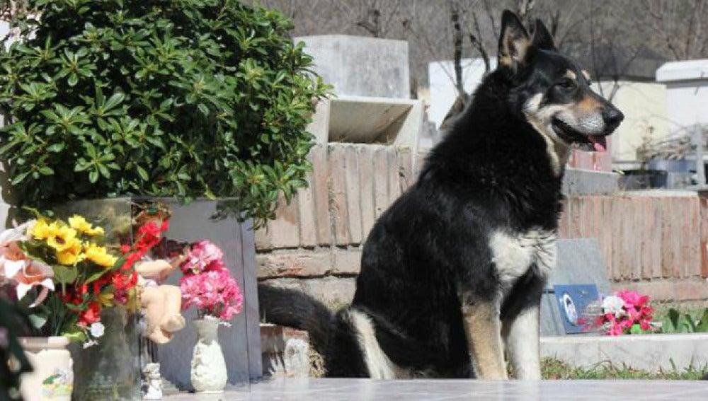 El perro Capitán