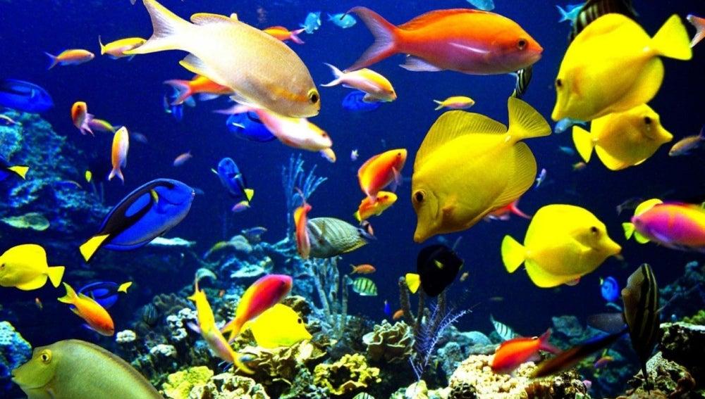 Fondo marino lleno de peces