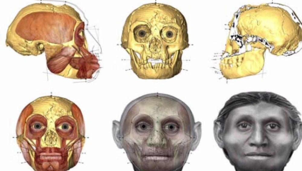 Evolución hacia el hobbit humano