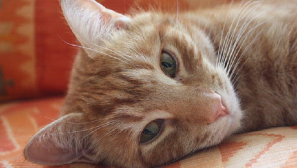 El gato Orlando