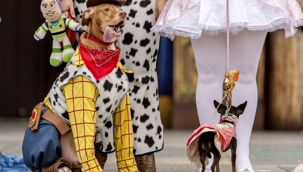Hasta los animales se disfrazan en Las Palmas