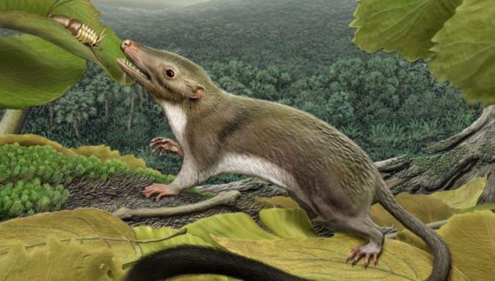 El antepasado más antiguo de los mamíferos placentarios