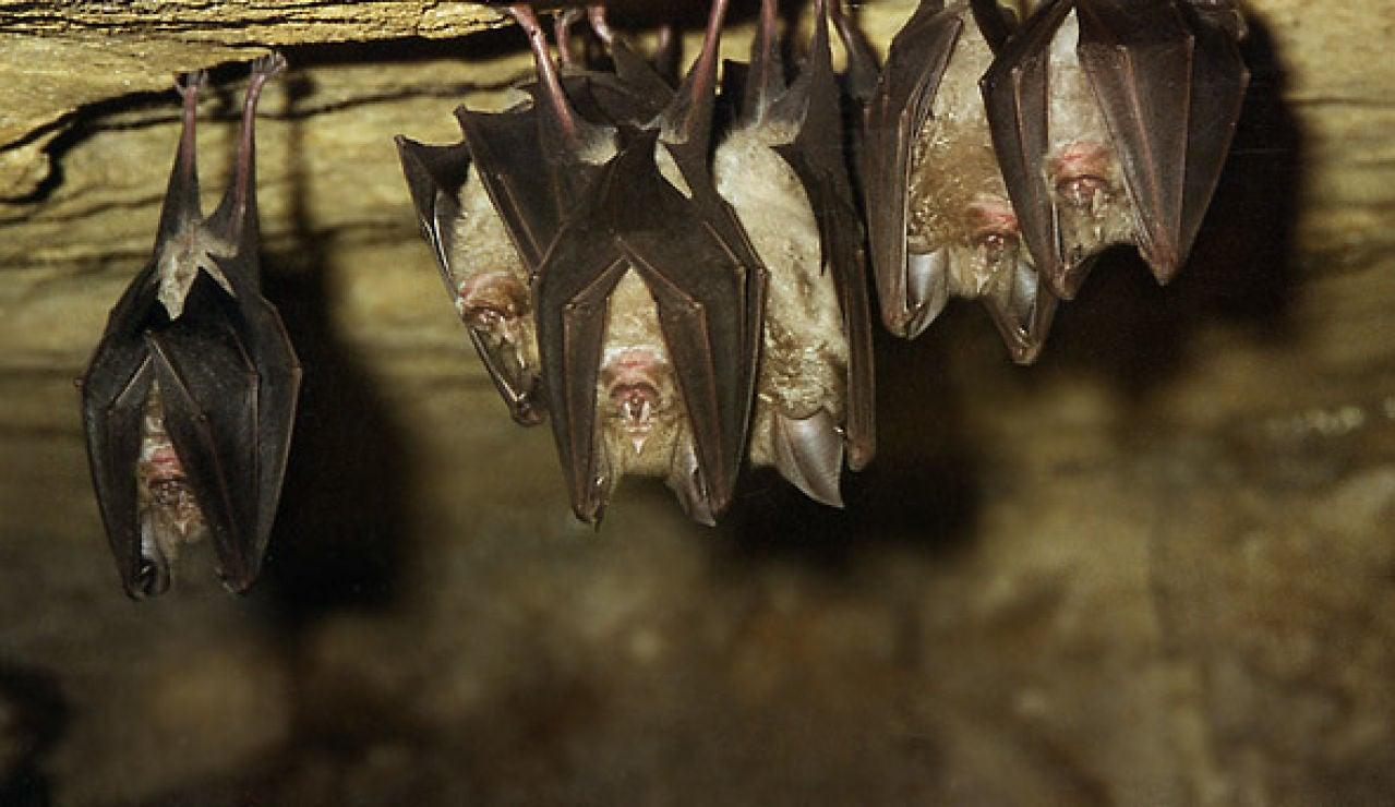 Varios murciélagos