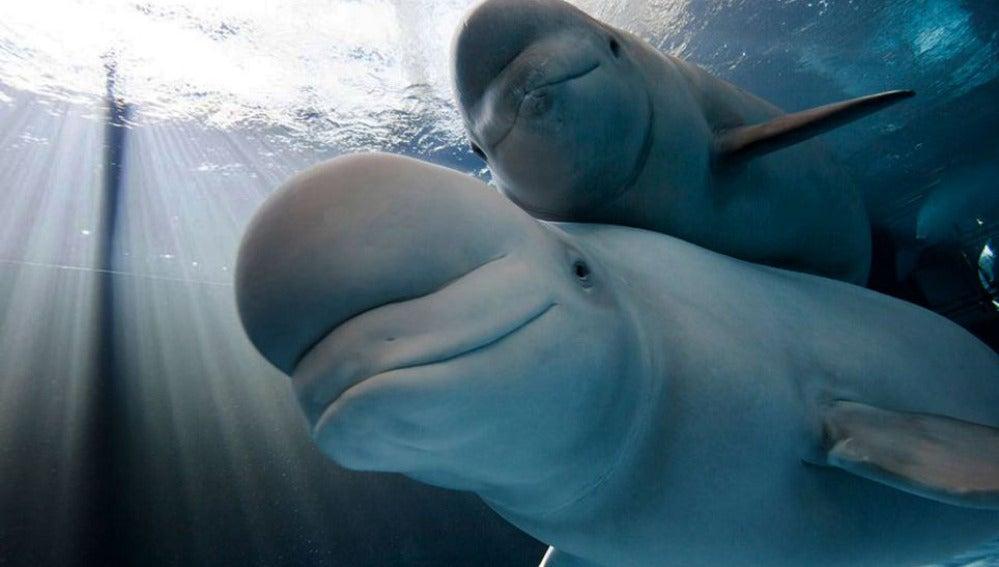 Madre e hija ballena dando un paseo