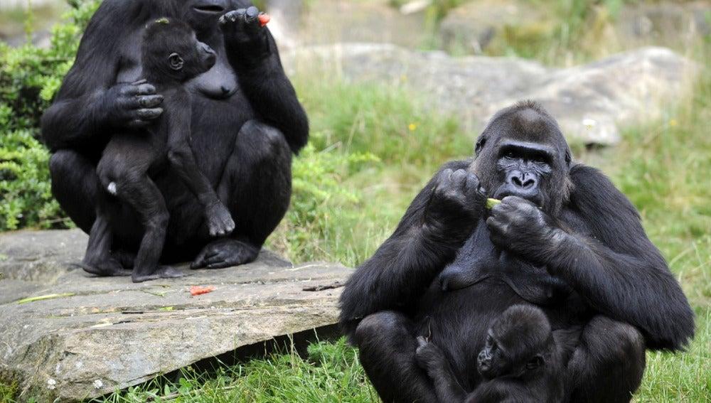 Más de cien primates en el norte de Madrid
