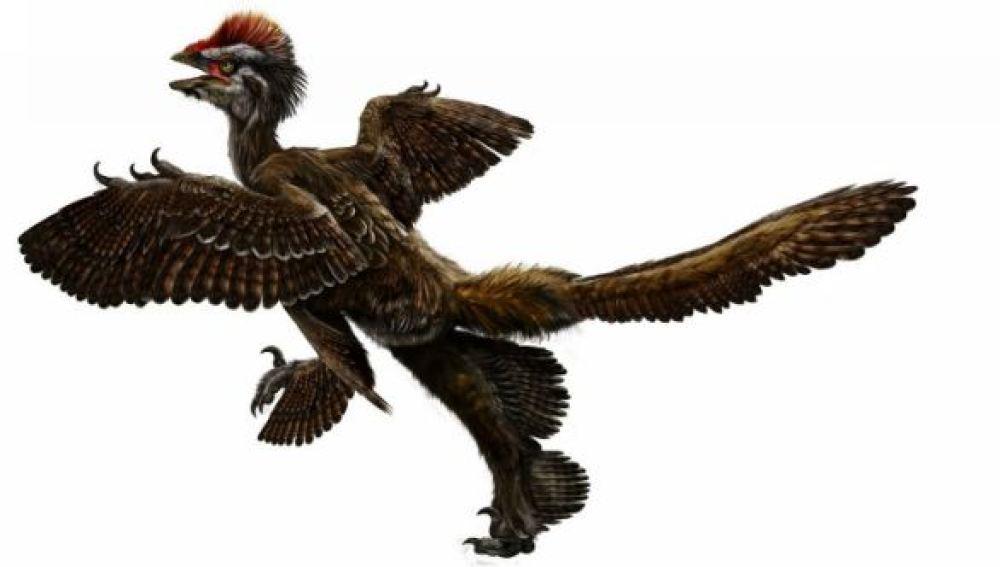 Anchiornis Huxley, especie con cuatro alas similar a un dinosauro