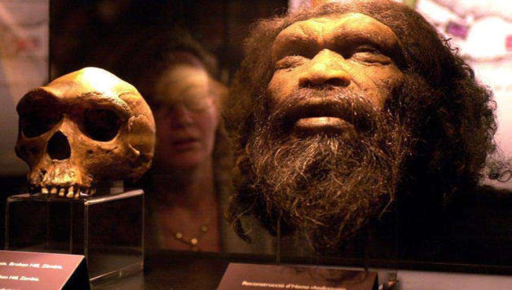 Reconstrucción de una cabeza de Homo rhodesiensis