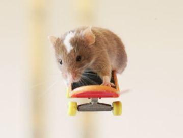 El ratón Pedro vuela en su monopatín