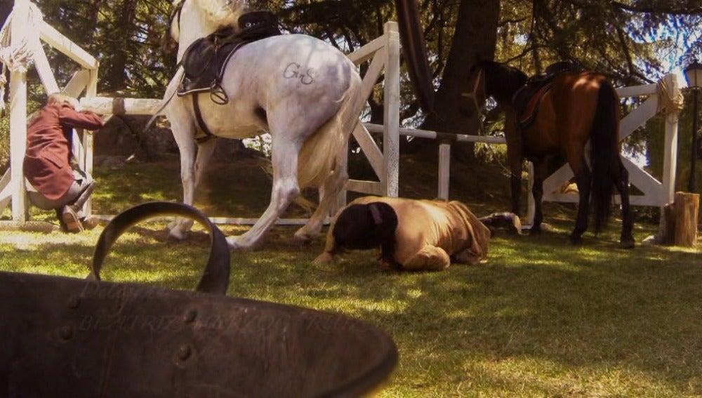 El caballo se ceba con Fernando